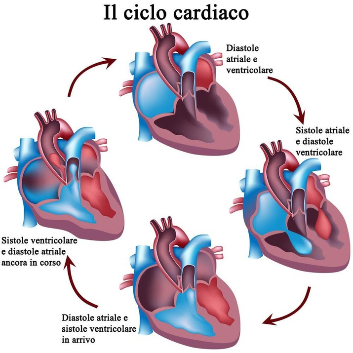 Sofa 60008997 further Stress And Huntingtons Disease together with Electrical System Of The Heart Diagram also Heart Healthy Kids moreover . on cardiovascular system simplified